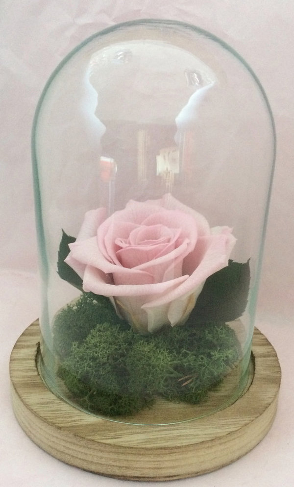 Rose Eternelle Rose Clair Sous Cloche Globe Rubis Rose Rose Stabilisee